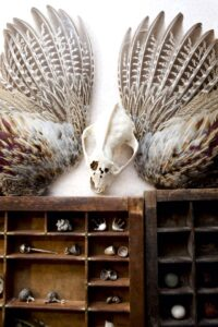 Skull and feathers