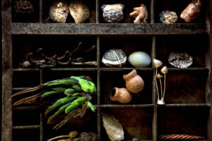 collecting organic objects