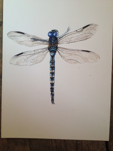 Dragonfly Fairy watercolour